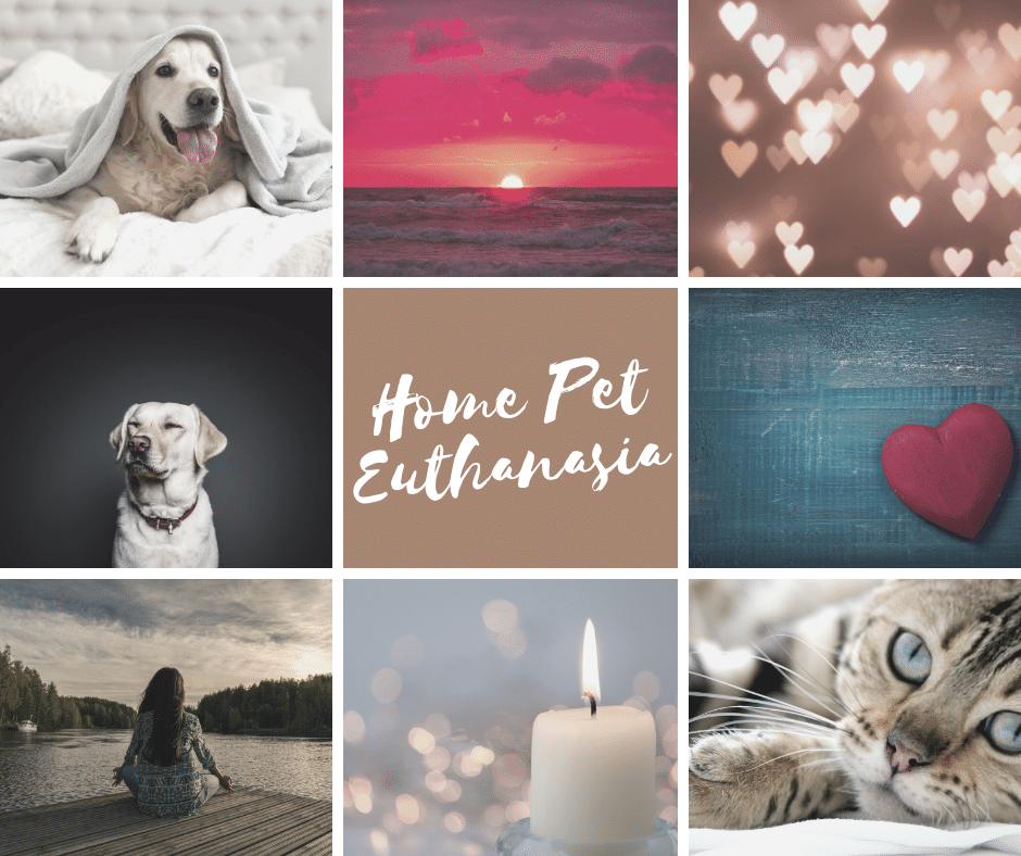 Compassionate Dignified Pet Euthanasia At Home Pawssum